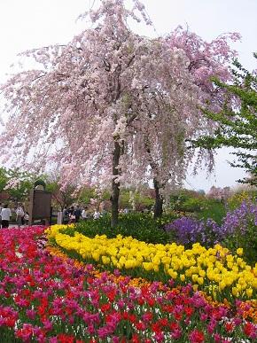桜吹雪と.jpg