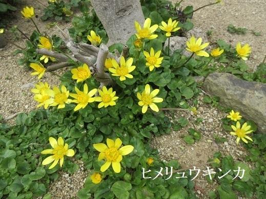IMG_0556 (2).JPG