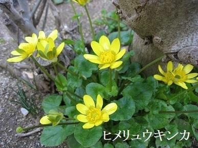 IMG_2466 (2).JPG