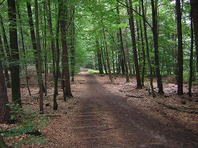 Marburg2005.jpg