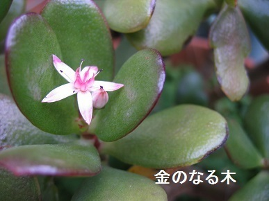 kaenonaruki.jpg